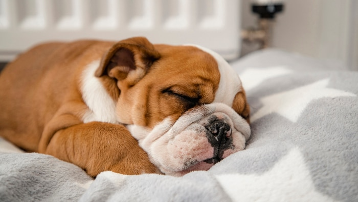 Why Does My Pet Snore So Much?